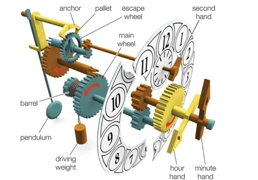 A picture of the components of a traditional pendulum clock to better elaborate on 8 Day Clocks